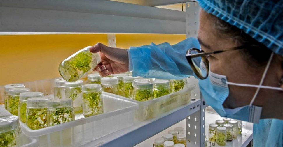 A researcher from the biotechnology laboratory of the Technological Institute of Costa Rica (TEC)